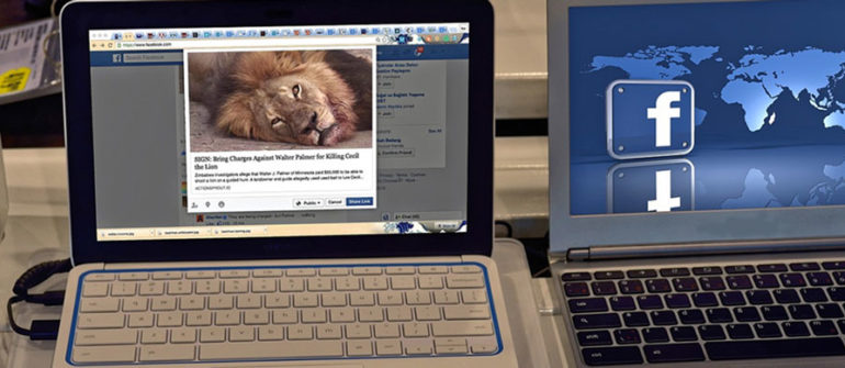 how to use facebook for amazing business results, picture of a facebook post that has a lion for a picture next to a laptop with a facebook background on it, facebook marketing for rv businesses